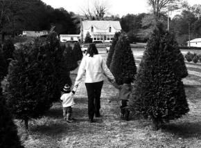 christmas tree farm 2007