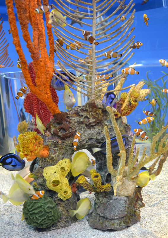 Alas, the Nemo tank. See if you can find Dory, Gill, Peach, Gurgle, and Bubbles...
