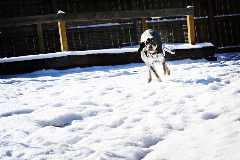 See dog run